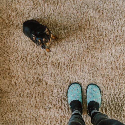 שטיחים לילדים