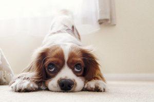 להתאים את הבית לגור כלב